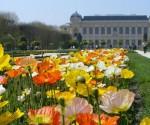 Parken in Parijs: Jardin des Plantes